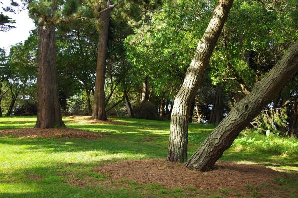 Trees in a green park