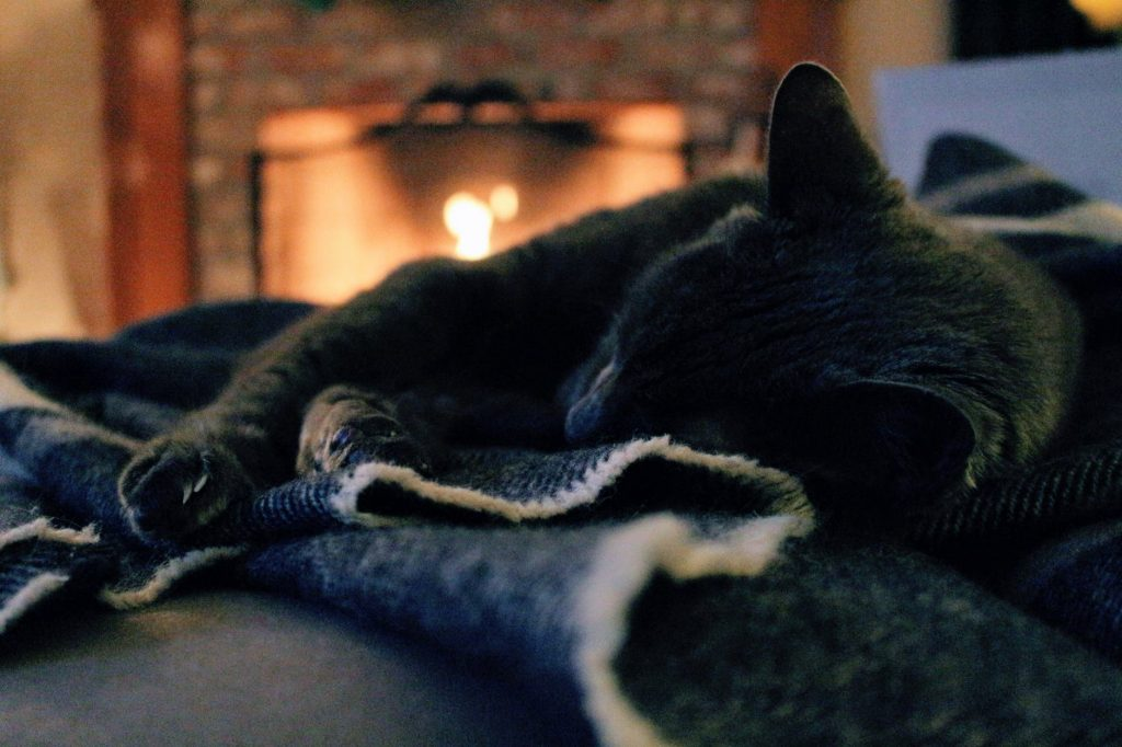 A cat sleeping by a fire
